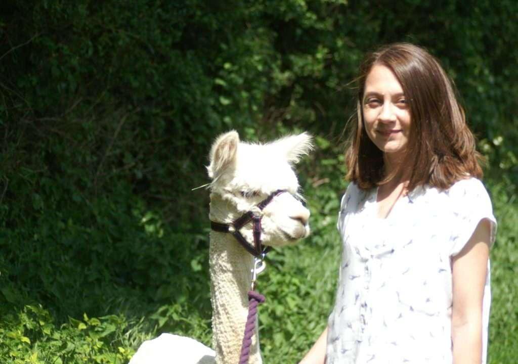 alpaca walks